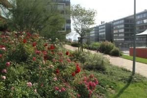 zahradní architekt a stavitel okrasných zahrad Praha