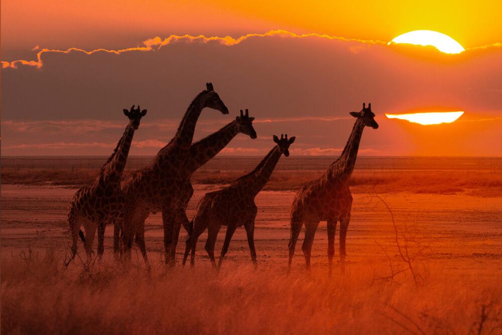 """další práce Udržitelnost """"neformálního trhu"""" v subsaharské Africe: Ekonomická analýza paradoxu"""