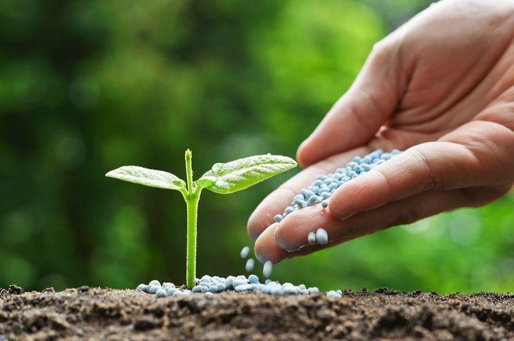 Ázerbajdžán letos utratí 68 milionů dolarů dovážené hnojivo v hodnotě dolarů