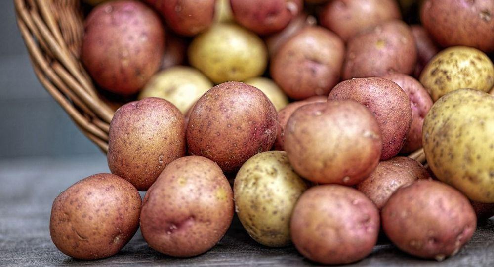 Jaký je důvod pro růst cen brambor v Kazachstánu?
